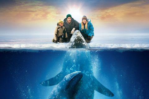 Kinotipp: Kinotipp: Der Ruf der Wale