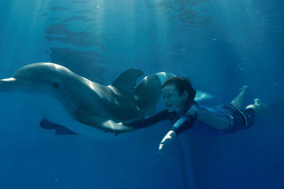 Kinotipp: Mein Freund der Delfin