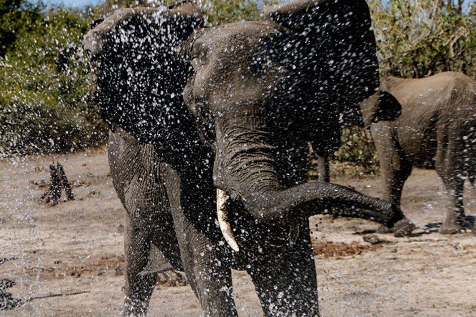 Kino: Kinotipp: African Safari 3D