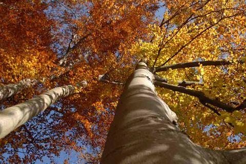 Kinotipp: Das grüne Wunder - Unser Wald