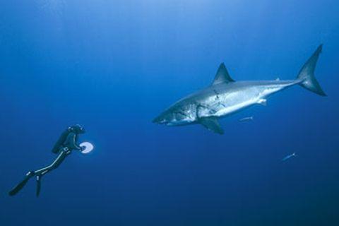 Kinofilme: Unsere Ozeane