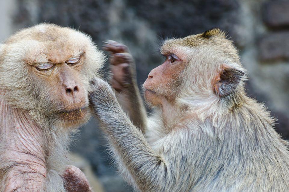 Redewendung: Mich laust der Affe