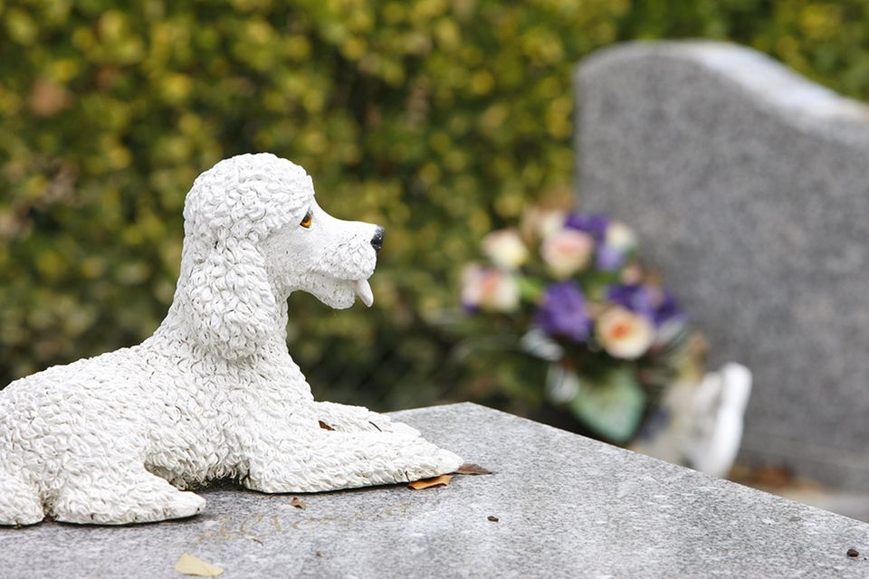 Redewendung: Da liegt der Hund begraben
