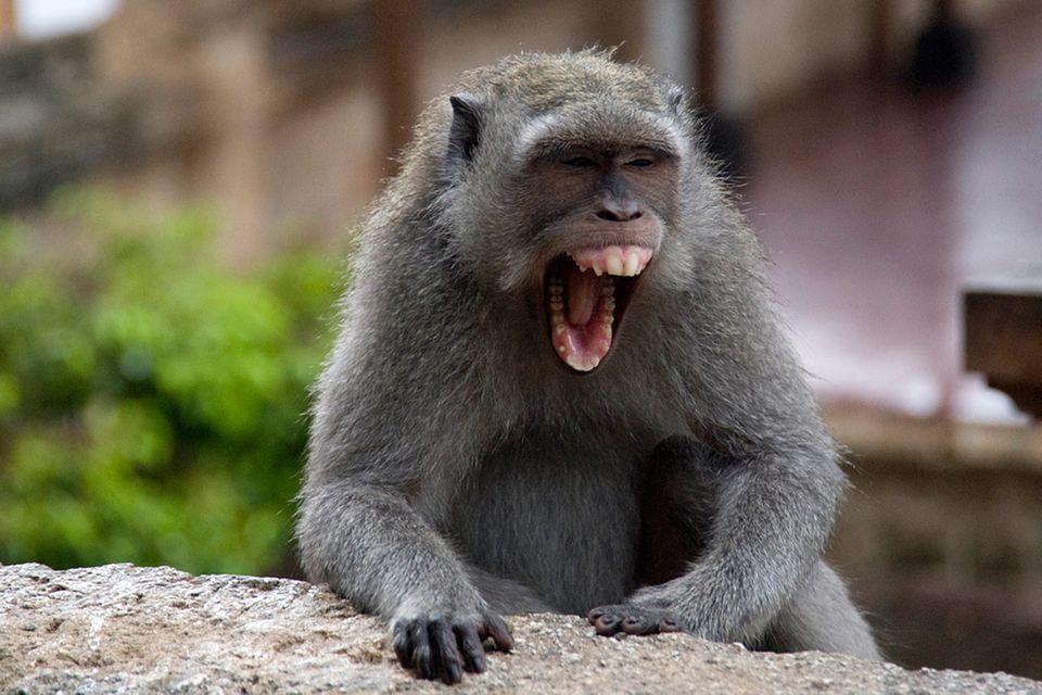 Redewendung: So ein Affentheater!