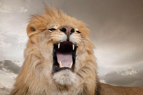 Redewendung: Sich in die Höhle des Löwen wagen