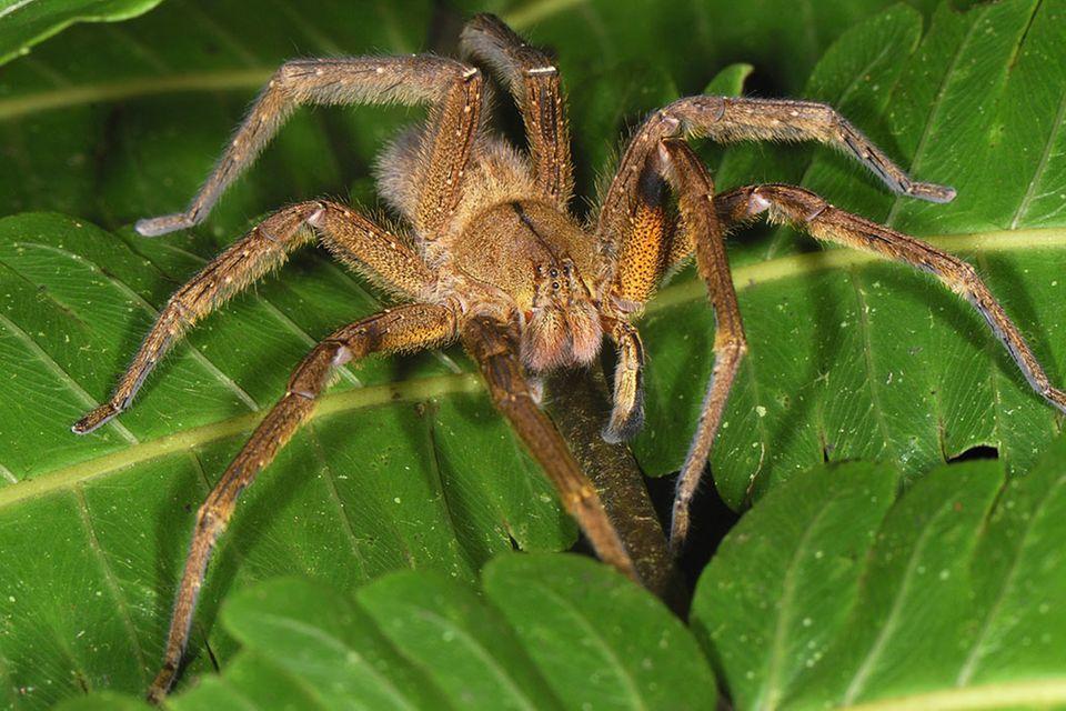Redewendung: Mit jemandem spinnefeind sein