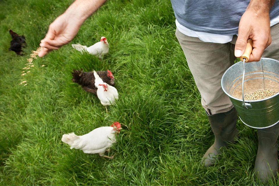Redewendung: Auch ein blindes Huhn findet mal ein Korn