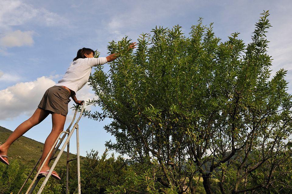 Redewendung: Auf keinen grünen Zweig kommen