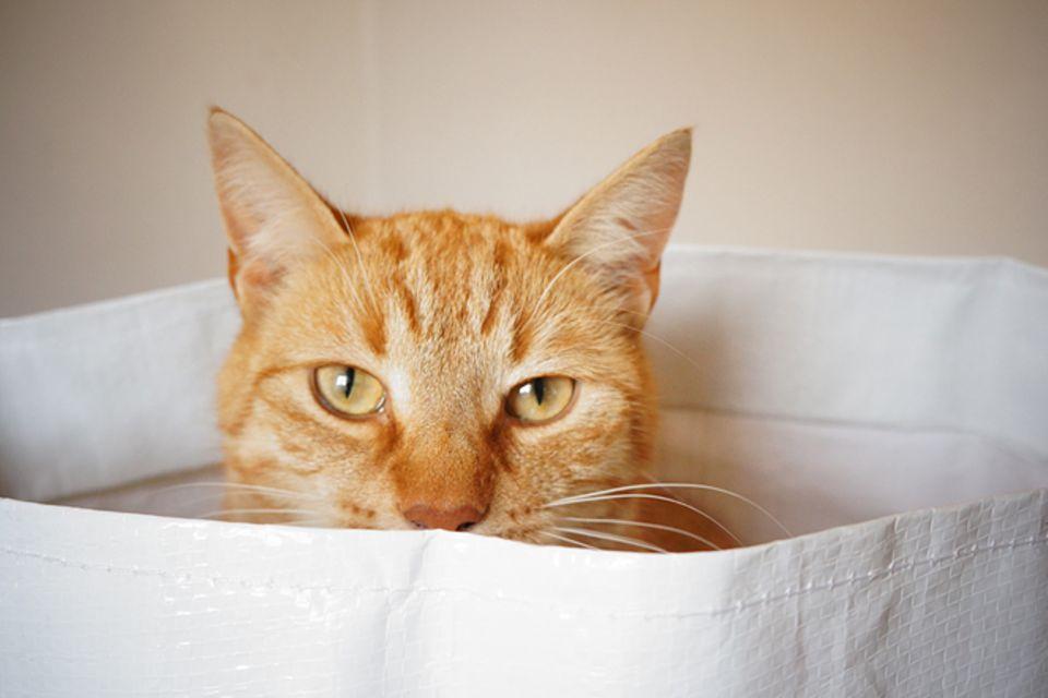 Redewendung: Die Katze im Sack kaufen