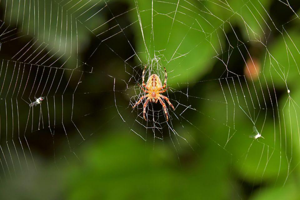 Redewendung: Spinne am Morgen bringt Kummer und Sorgen