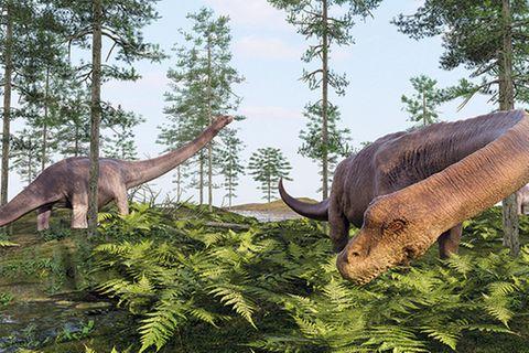Tierlexikon: Dreadnoughtus schrani