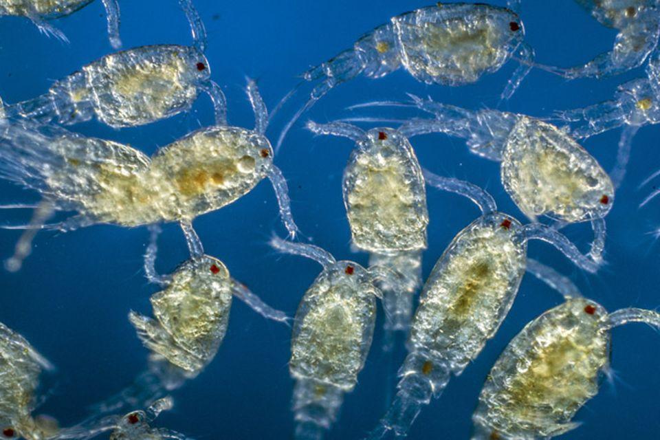 Tierlexikon: Plankton