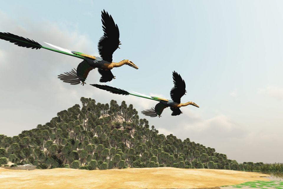 Tierlexikon: Microraptor