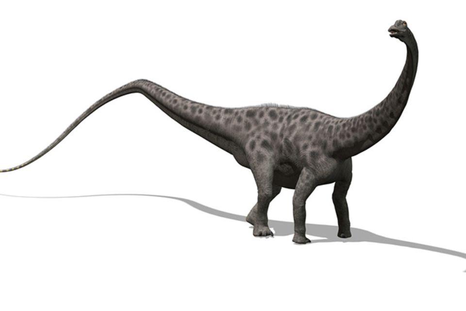 Tierlexikon: Diplodocus