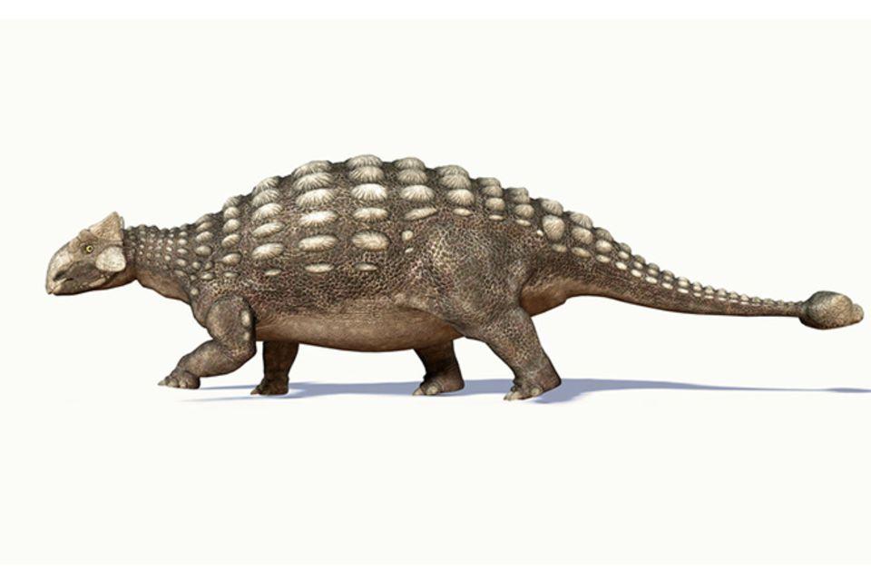Tierlexikon: Ankylosaurus