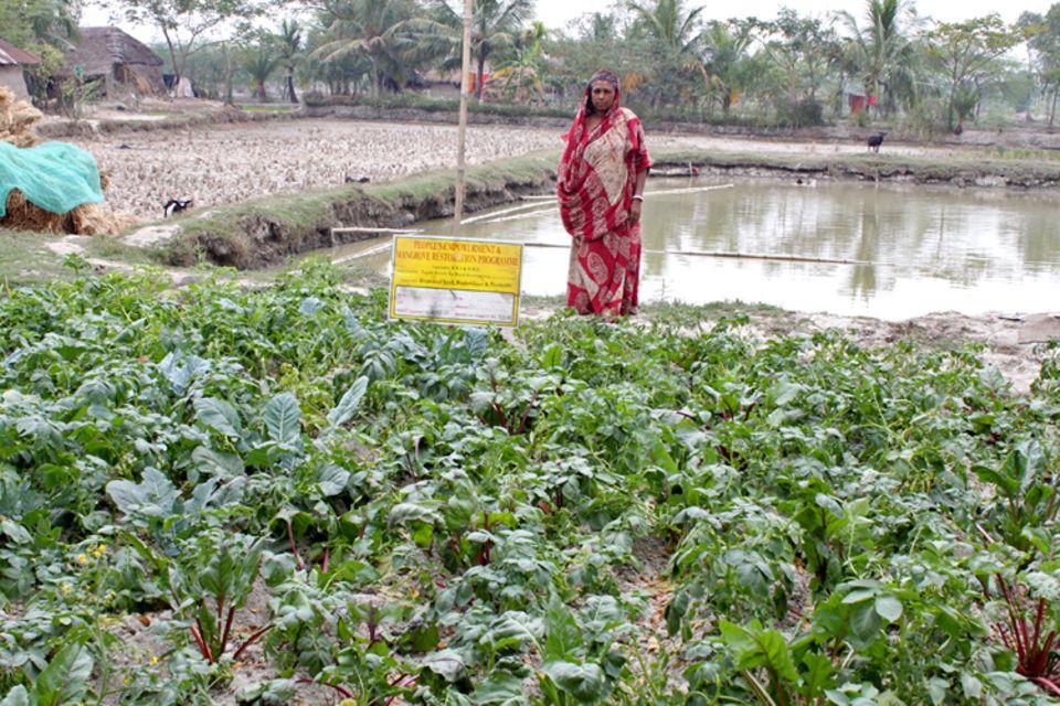Indien: Gemüsegärten, die neben Bewässerungsteichen angelegt sind, können in der trockenen Jahreszeit mit Wasser versorgt werden