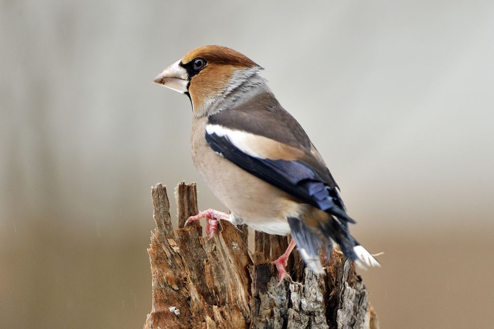 Vögel in Nordamerika: So bunt geht es im Garten einer Hobbyfotografin zu