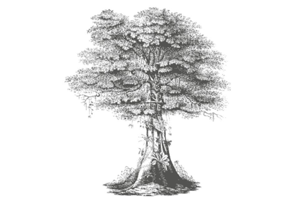 Regenwaldverein