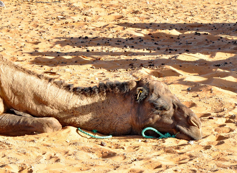Redewendung: Kopf in den Sand stecken