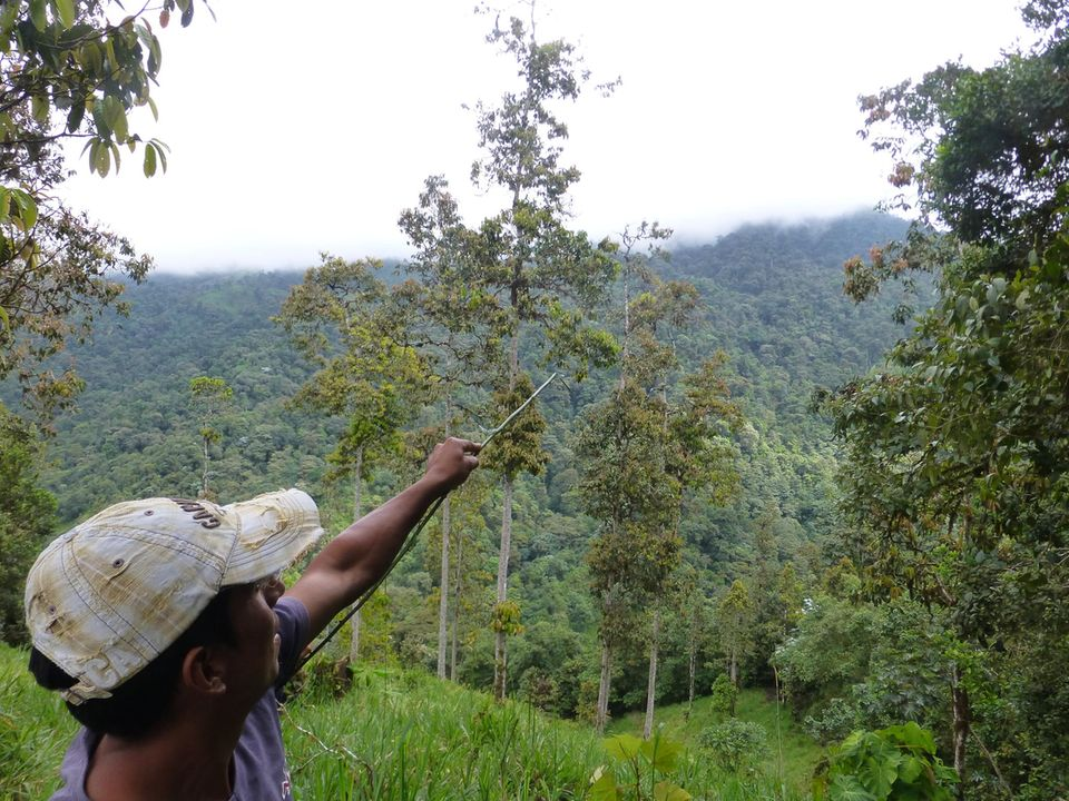 Ecuador: Artenreicher Nebelwald bedeckt die Berghänge