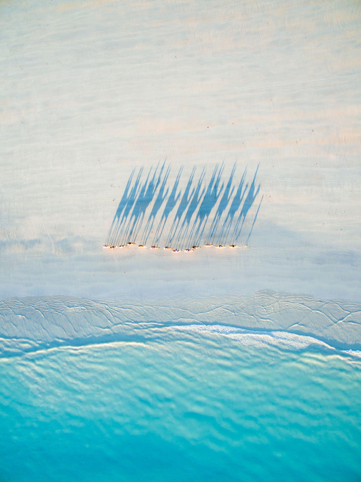Kamele aus der Luft am Strand von Broome in Australien