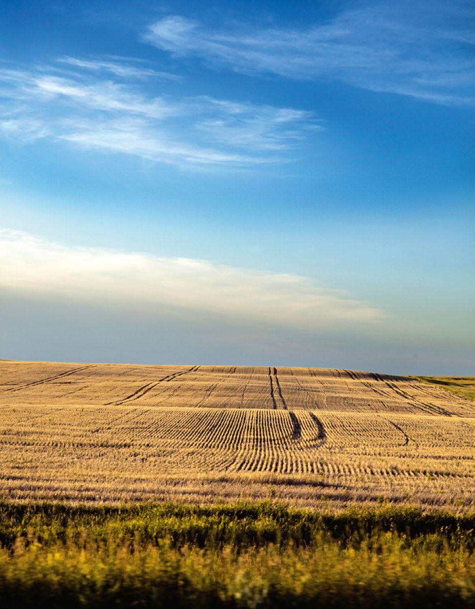 Alberta: Weite Felder am Highway 9 auf dem Weg nach Oyen