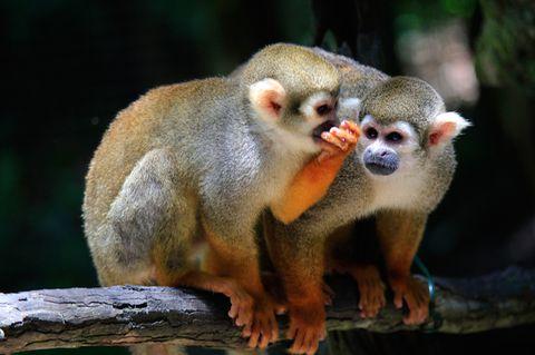 Redewendung: Klappe zu, Affe tot