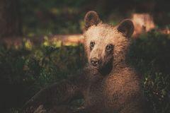 Bär, Konsta Punkka