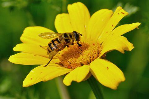 Die Taufe der Wildbiene