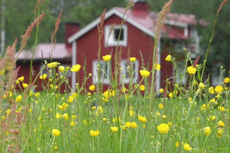 Holzhaus in Finnland
