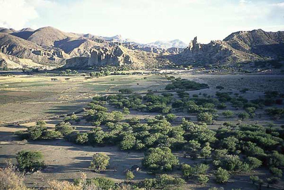 Beruf: Seltener Anblick: Bäume, wie in dieser Tal-Aue, bekommt man in den bolivianischen Anden kaum zu sehen