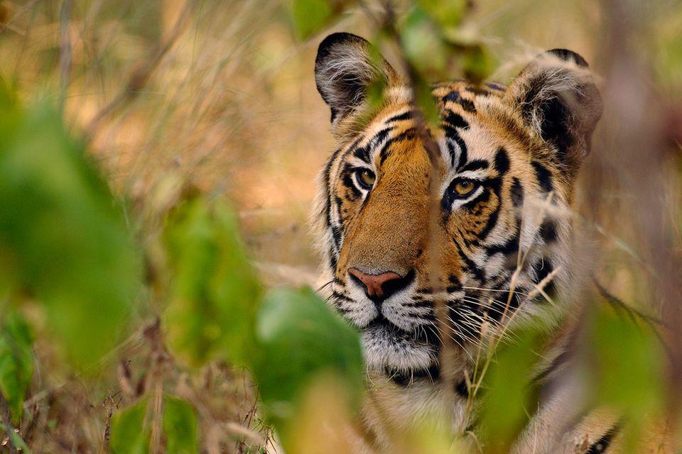 Mekong-Region: Regenbogenschlange und 162 weitere Tierarten entdeckt