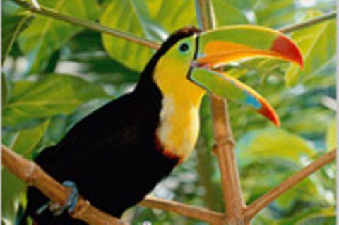 Costa Rica: Leben im Urwald