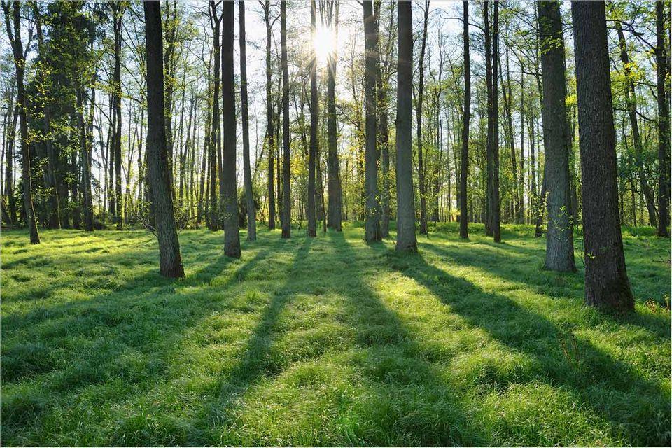 Umweltschutz: Waldsterben: Hysterie oder Weckruf?