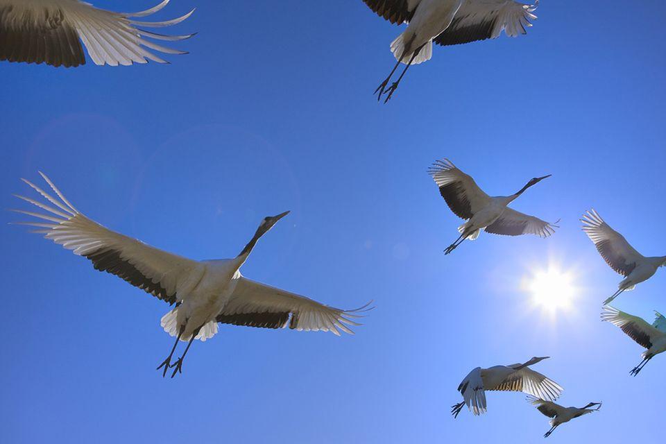 Zugvögel: Die Routen der Zugvögel