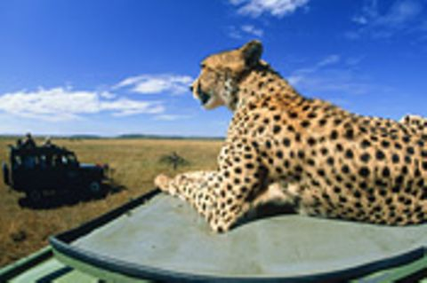 Straßenpläne: Serengeti bleibt unberührt
