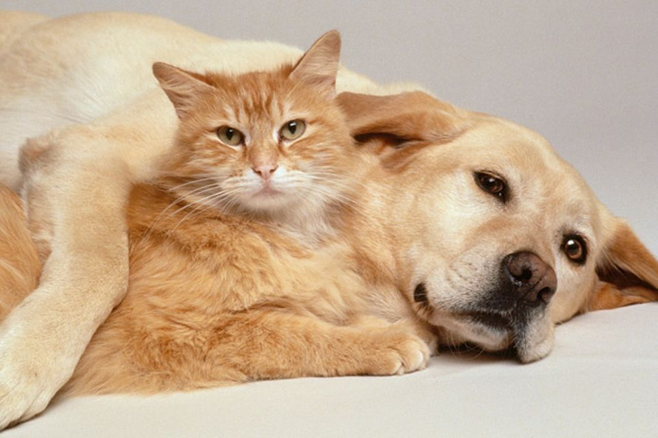 Tiere: Haustiere