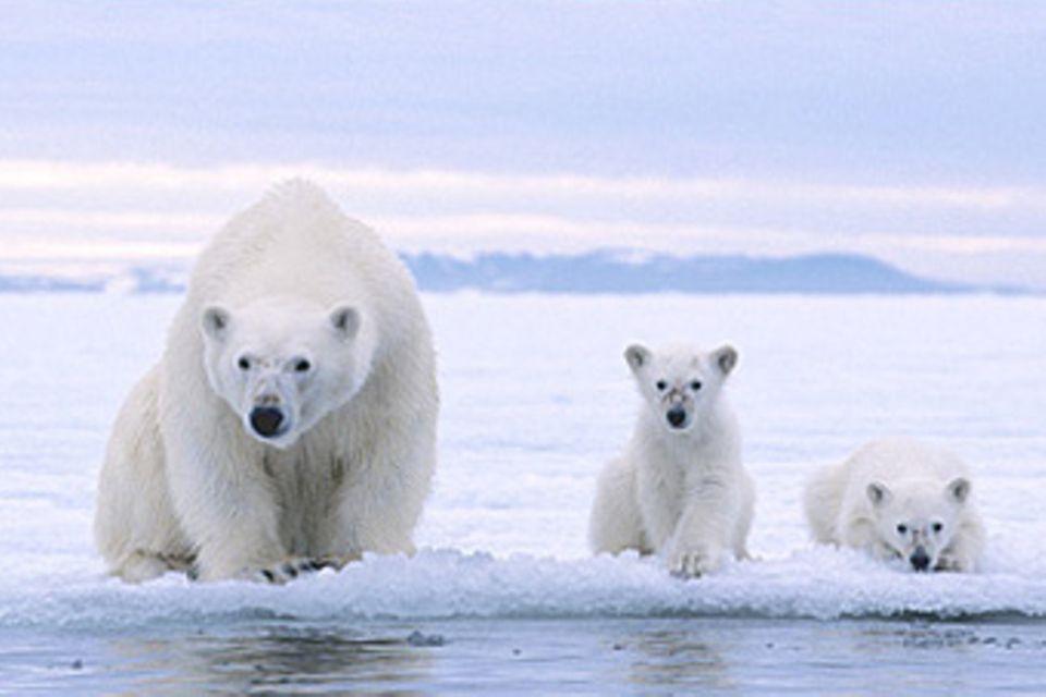 Geografie: Die Antarktis