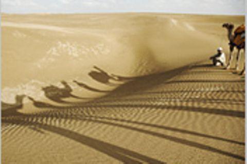 Ohne Wüste kein Regenwald