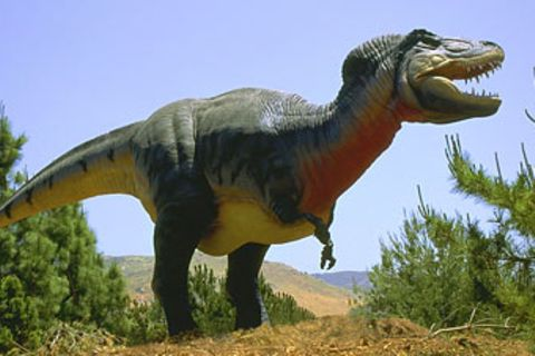 Wales: Vierjährige findet Dinosaurier-Fußabdruck beim Spaziergang