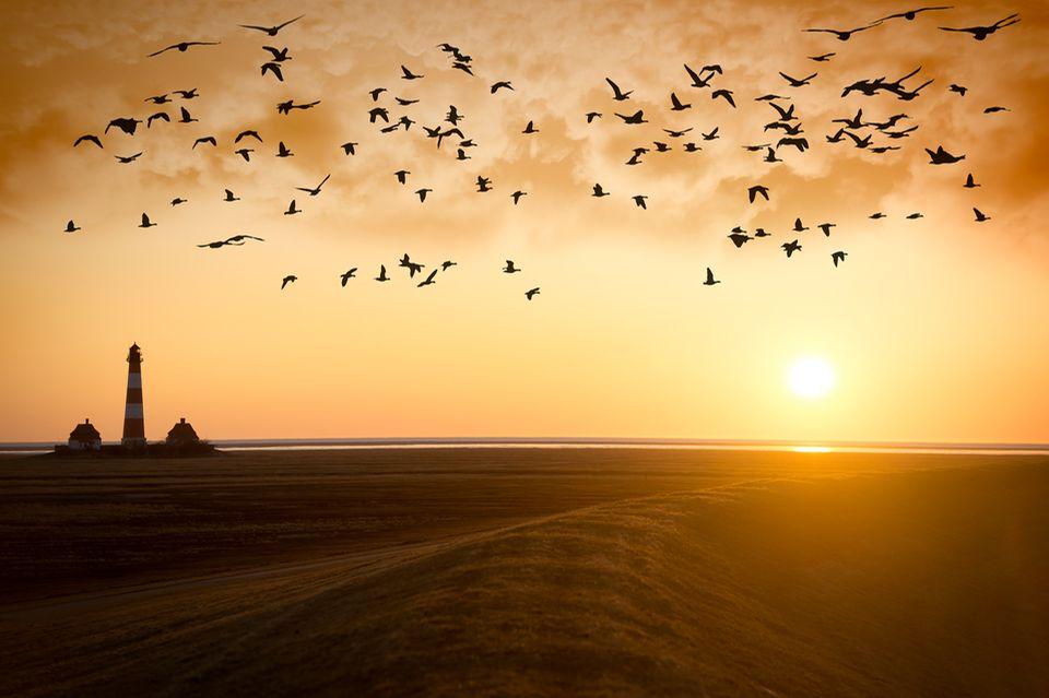 Zugvögel: Zugvögel am Abendhimmel
