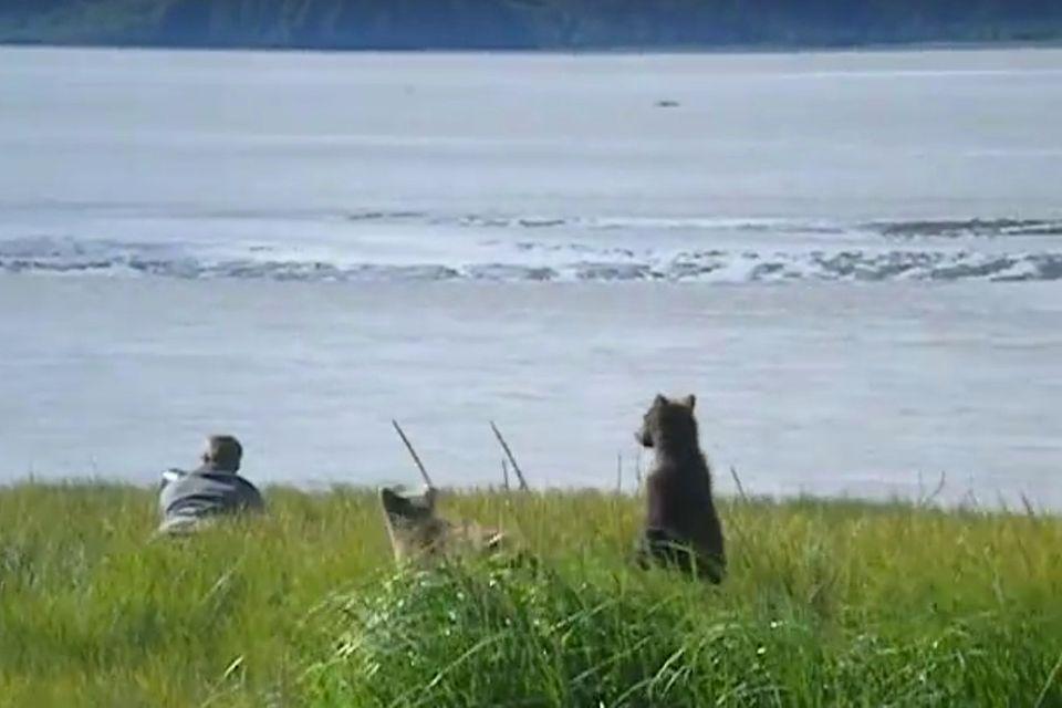 Schreckmoment in Alaska: Tierfotograf trifft auf Bärenfamilie