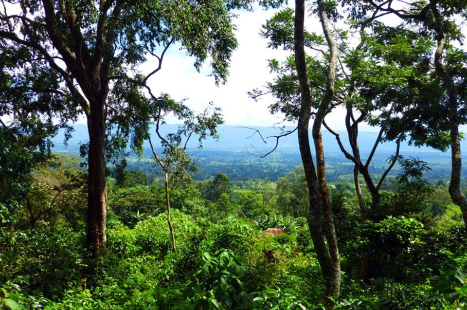Blick über die grüne Landschaft nahe Meskela, Kaffa