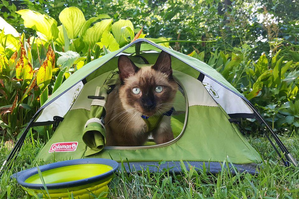 Abenteuer: Camping mit Katzen