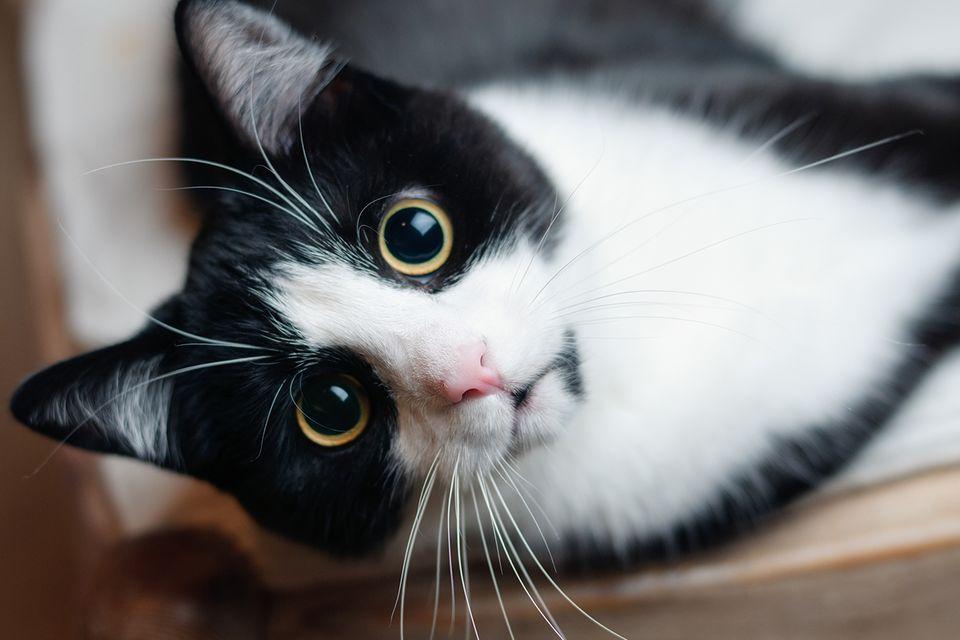 Tiere: Katzen