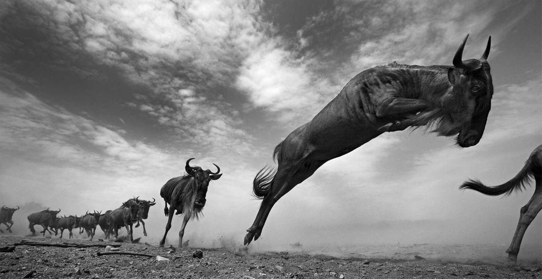 Die letzten Tiere der Mara