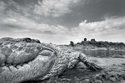 Anup Shah, Die letzten Tiere der Mara