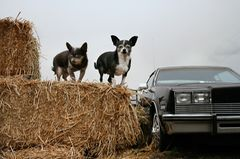 Breebee und Nuny, Hunde