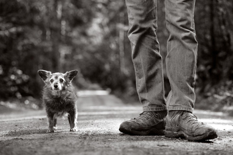 Ratzoe, Hund