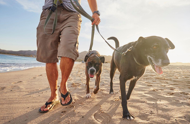 Spaziergang mit Hunden